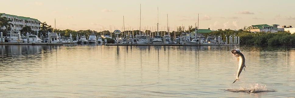 Sunset Marina Key West